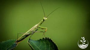 Insecticide, le suicide d'une civilisation