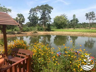 Wwoofing en thailande, faire du volontariat en thailande, faire du bénévolat en thailande, woofing thailande, thai wwoof, excursion en issan, découvrir l'isan, thailande authentique