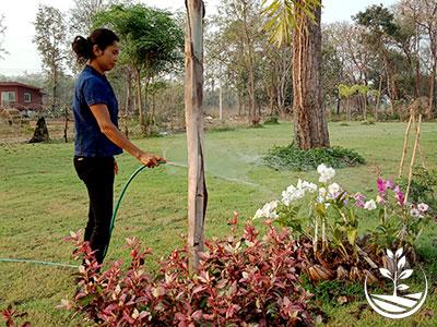 Wwoofing en thailande, faire du volontariat en thailande, faire du bénévolat en thailande, woofing thailande, thai wwoof, excursion en issan, découvrir l'isan, orchidée