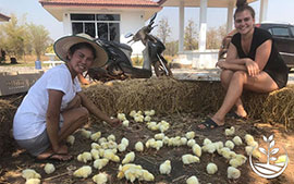 thai wwoofing, wwoofing en thailande, woofing, woofing en thailande, wwoof Thaïlande, écotourisme, eco-tourisme, permaculture, culture tropicale, tourisme vert; permaculture, bénévolat en thailande, farmstay