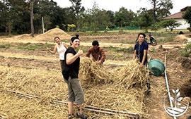 woofing, woofing en thailande, wwoof Thaïlande, écotourisme, eco-tourisme, permaculture, culture tropicale, tourisme vert; permaculture, bénévolat en thailande, volontariat