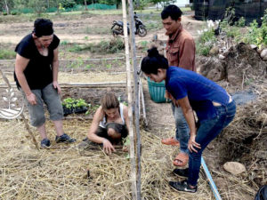 Wwoofing en thailande, faire du volontariat en thailande, faire du bénévolat en thailande, woofing thailande, thai wwoof, potager en thailande