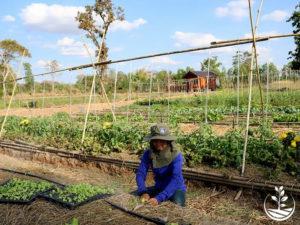 Wwoofing en thailande, faire du volontariat en thailande, faire du bénévolat en thailande, woofing thailande, thai wwoof, irrigation