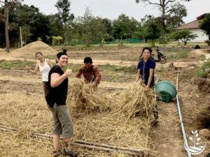 Wwoofing en thailande, faire du volontariat en thailande, faire du bénévolat en thailande, woofing thailande, thai wwoof, permaculture tropicale
