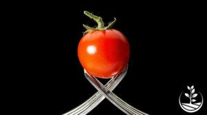 Tomate en Thaïlande : culture, entretien et astuces