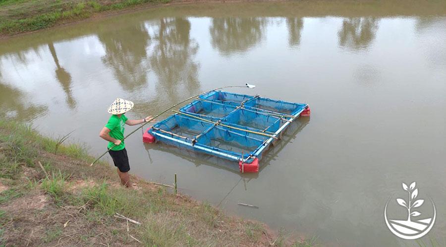 Elevage de poissons en Thaïlande