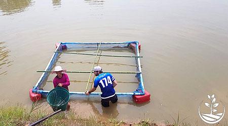 nourrir les poissons d'élevage