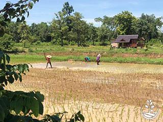 wwofing en Thaïlande, faire du volontariat en Thaïlande