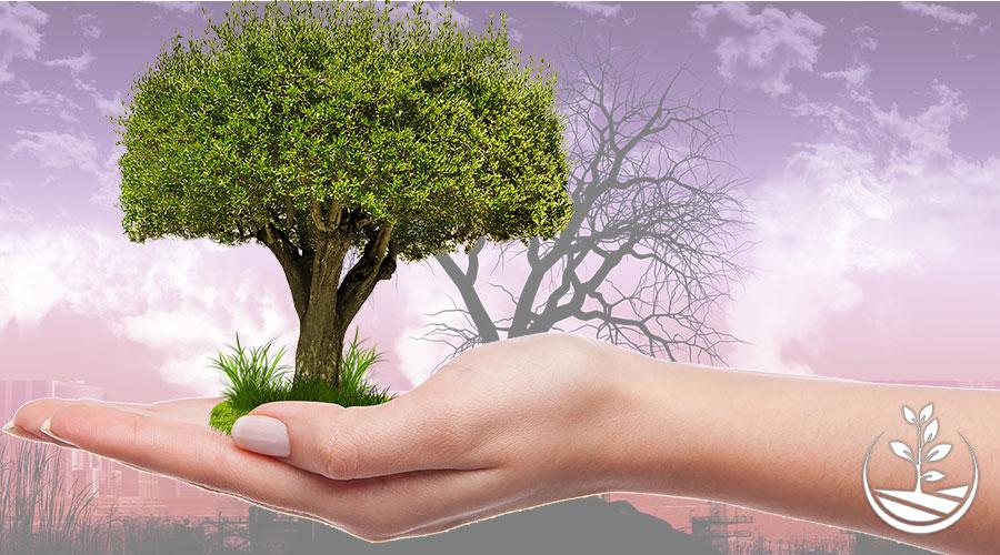 Planter des arbres pour nous sauver du réchauffement climatique ?