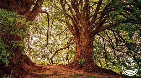 foret tropicale planter des arbres
