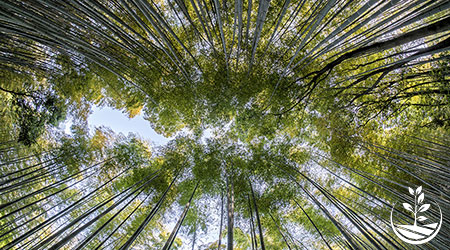 bambou thailande construction