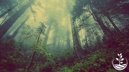 planter des arbres en Thaïlande