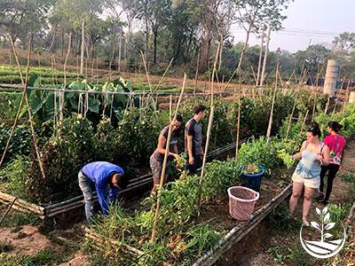 stage de permaculture, woofing en Thaïlande, cours d'agriculture bio