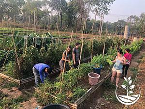woofing en Thaïlande, stage de permaculture en Thaïlande