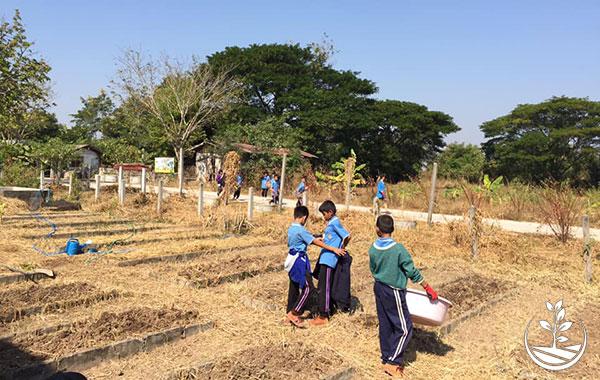 woofing en Thaïlande, stage de permaculture en Thaïlande, agriculture bio en Thaïlande, la Thaïlande autrement