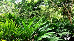 Agroforesterie, plantez votre avenir bio dès maintenant