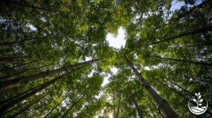 Planter des arbres, semer la vie, nouveau projet