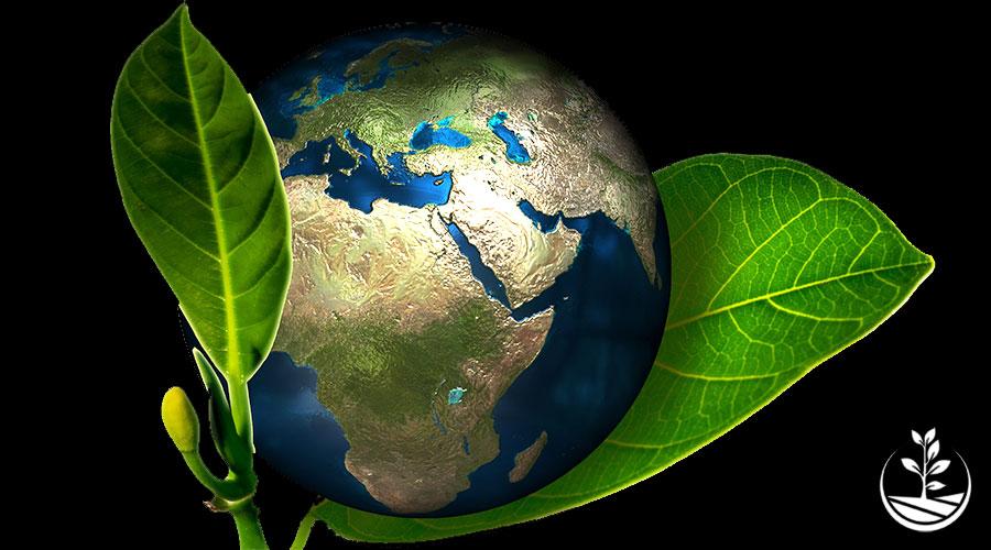 L'écologie, ce remède qui aurait pu tous nous sauver