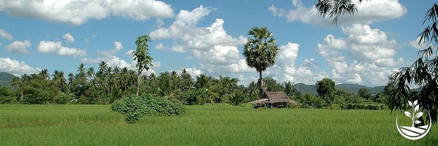 suwan organic farmstay, woofing, permaculture thailande, stage, construction naturellen tourisme autrement, agriculture bio