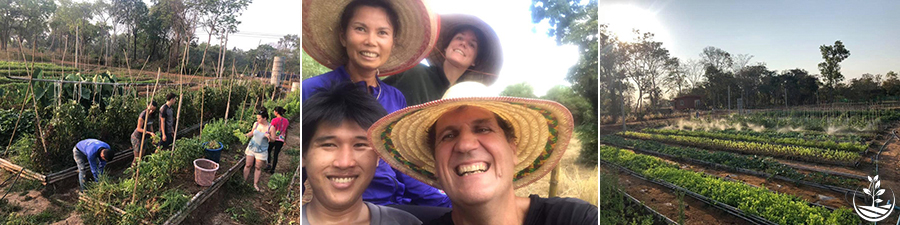 woofing en Thaïlande