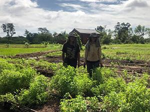 agriculture bio en Thaïlande