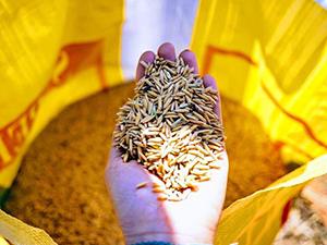 stage de permaculture, stage en Thaïlande