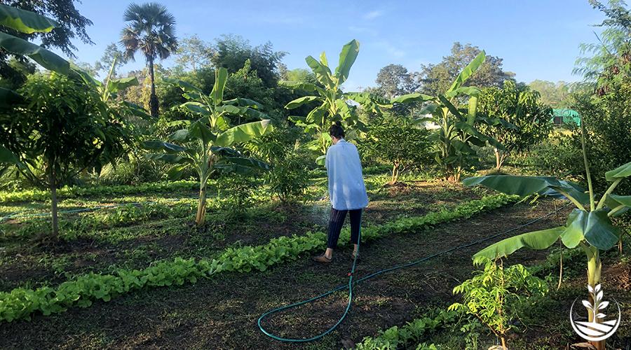 Associer des légumes, entraide entre les plantes de votre potager