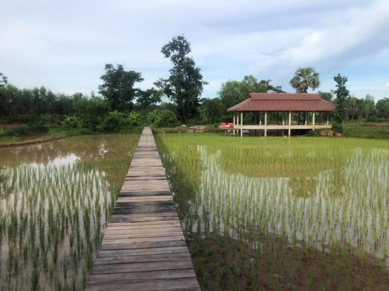 A common space in the middle of the rice fields