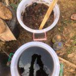 Thé de compost natural farming